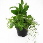 herbs-2126283_640